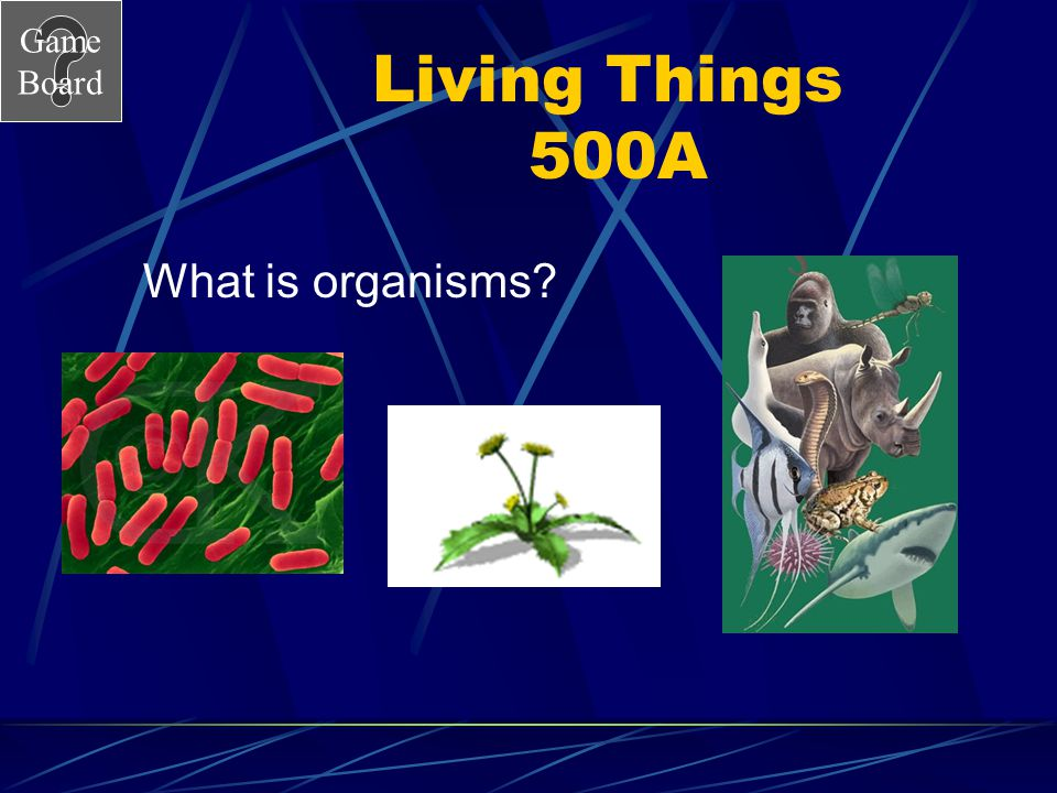 Game Board Living Things 500A What is organisms?