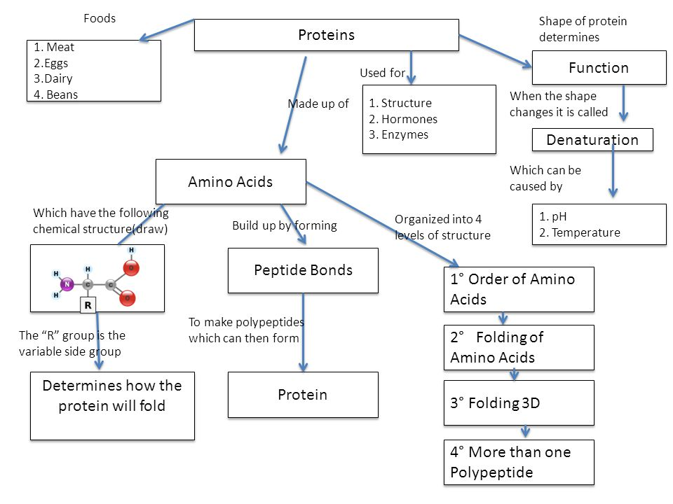 Word bank for proteins: Peptide bonds 20 amino acids Proteins Meat Hormones (chemical signals) Denature Folding of amino acids (alpha helix and beta sheets) pH Folding into 3D structure to get function Structure (hair and nails) Dairy Eggs Beans More than one polypetide chain Function Temperature Enzymes Order of amino acids Determines how the protein will fold