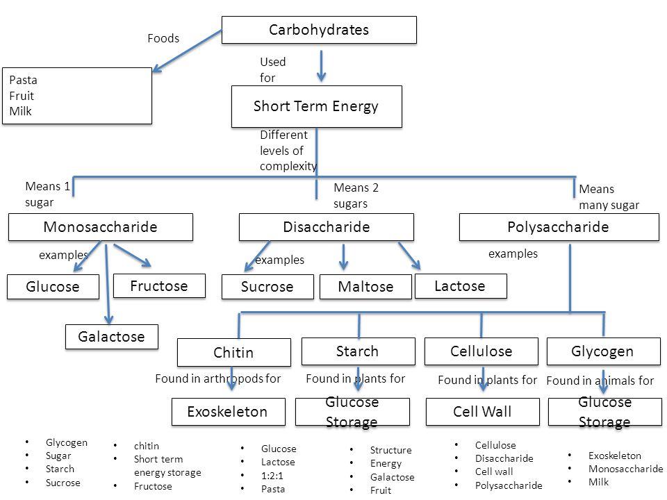 Carbohydrates Pasta Fruit Milk Pasta Fruit Milk Short Term Energy Disaccharide Monosaccharide Starch Polysaccharide Galactose Glucose Maltose Sucrose