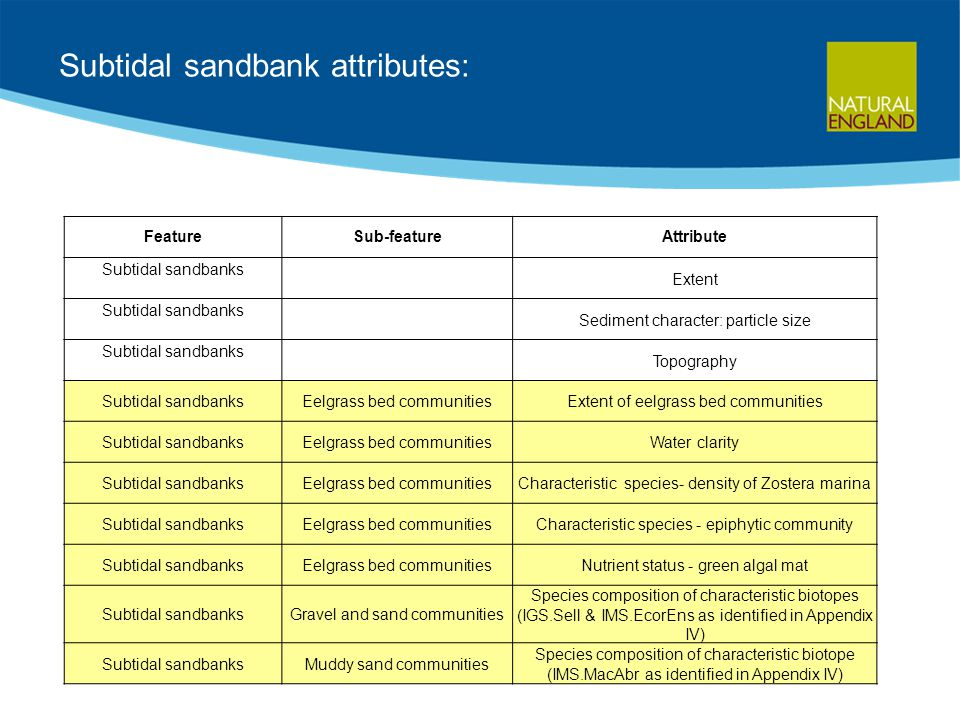 Subtidal sandbank attributes: FeatureSub-featureAttribute Subtidal sandbanks Extent Subtidal sandbanks Sediment character: particle size Subtidal sandbanks Topography Subtidal sandbanksEelgrass bed communitiesExtent of eelgrass bed communities Subtidal sandbanksEelgrass bed communitiesWater clarity Subtidal sandbanksEelgrass bed communitiesCharacteristic species- density of Zostera marina Subtidal sandbanksEelgrass bed communitiesCharacteristic species - epiphytic community Subtidal sandbanksEelgrass bed communitiesNutrient status - green algal mat Subtidal sandbanksGravel and sand communities Species composition of characteristic biotopes (IGS.Sell & IMS.EcorEns as identified in Appendix IV) Subtidal sandbanksMuddy sand communities Species composition of characteristic biotope (IMS.MacAbr as identified in Appendix IV)
