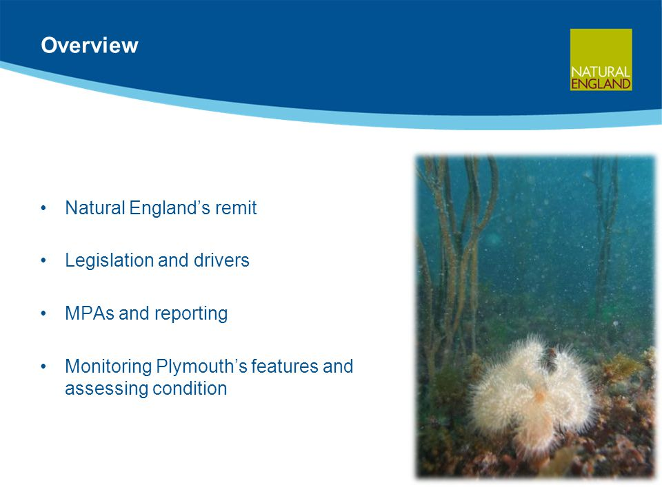 Overview Natural England's remit Legislation and drivers MPAs and reporting Monitoring Plymouth's features and assessing condition