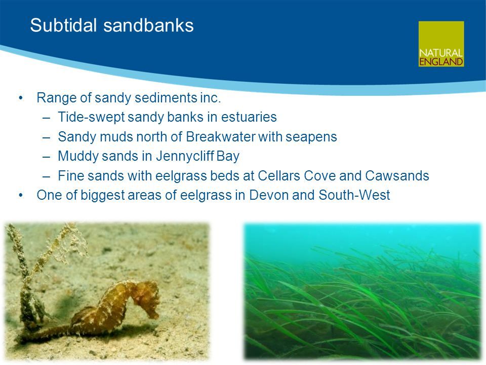 Subtidal sandbanks Range of sandy sediments inc.