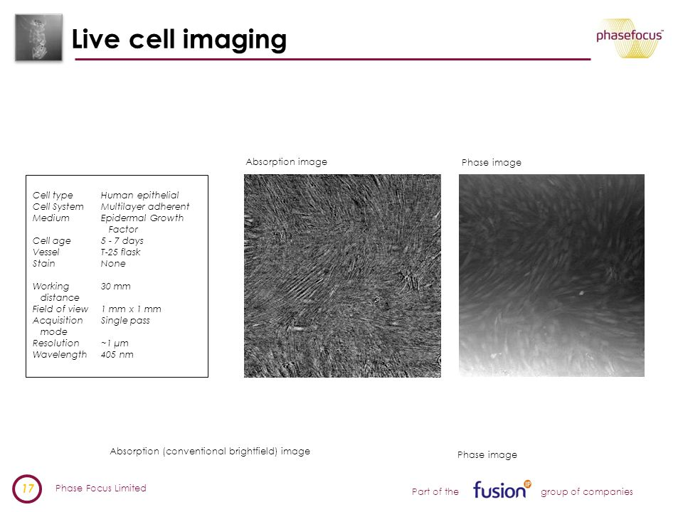 Phase Focus Limited 17 Part of the group of companies Live cell imaging Absorption (conventional brightfield) image Phase image Cell typeHuman epithelial Cell SystemMultilayer adherent MediumEpidermal Growth Factor Cell age5 - 7 days VesselT-25 flask StainNone Working30 mm distance Field of view1 mm x 1 mm Acquisition Single pass mode Resolution~1 µm Wavelength405 nm Absorption image Phase image