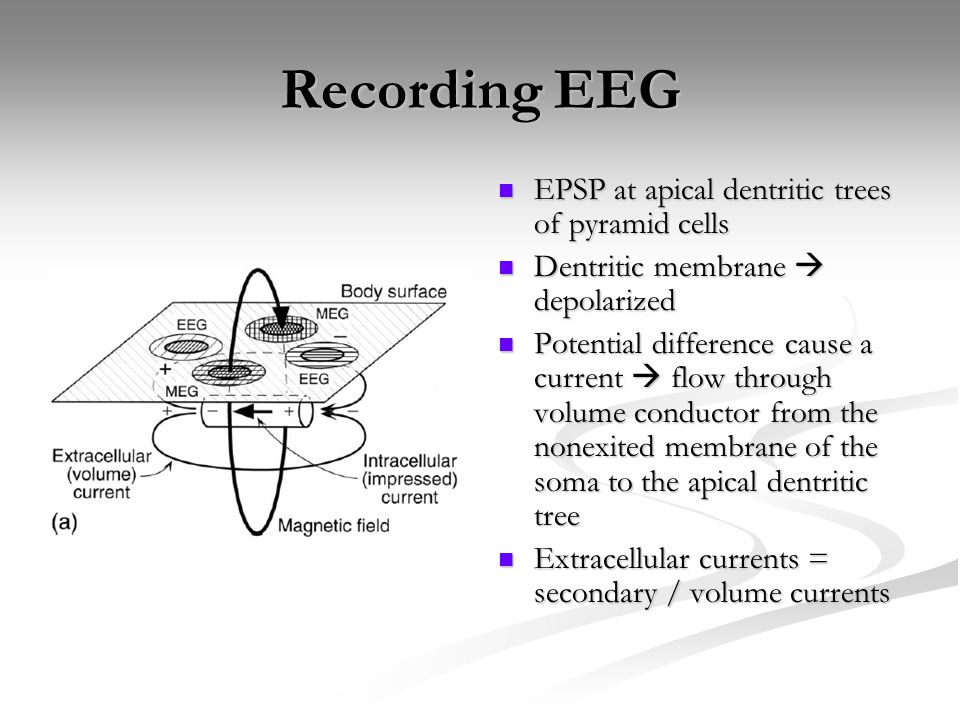 Recording EEG EPSP at apical dentritic trees of pyramid cells Dentritic membrane  depolarized Potential difference cause a current  flow through vol