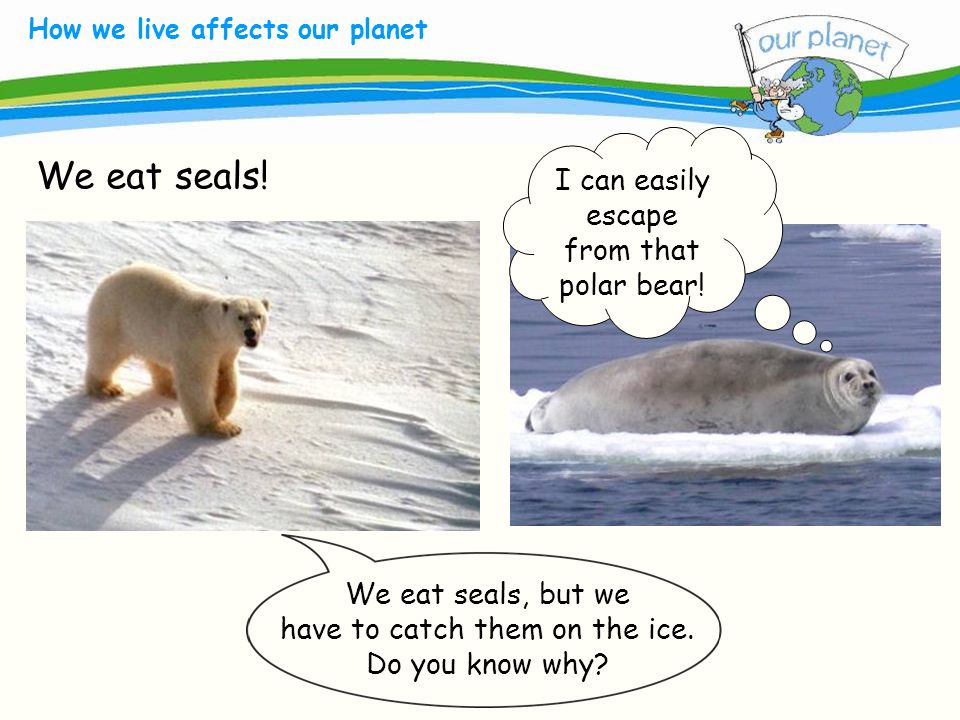 What size is your carbon footprint. How we live affects our planet We eat seals.