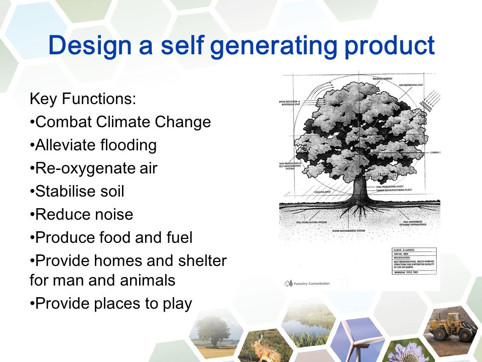 Design a self generating product Key Functions: Combat Climate Change Alleviate flooding Re-oxygenate air Stabilise soil Reduce noise Produce food and