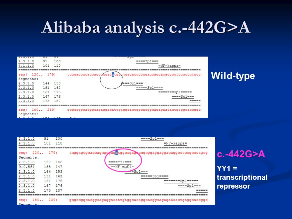 Alibaba analysis c.-442G>A Wild-type c.-442G>A YY1 = transcriptional repressor