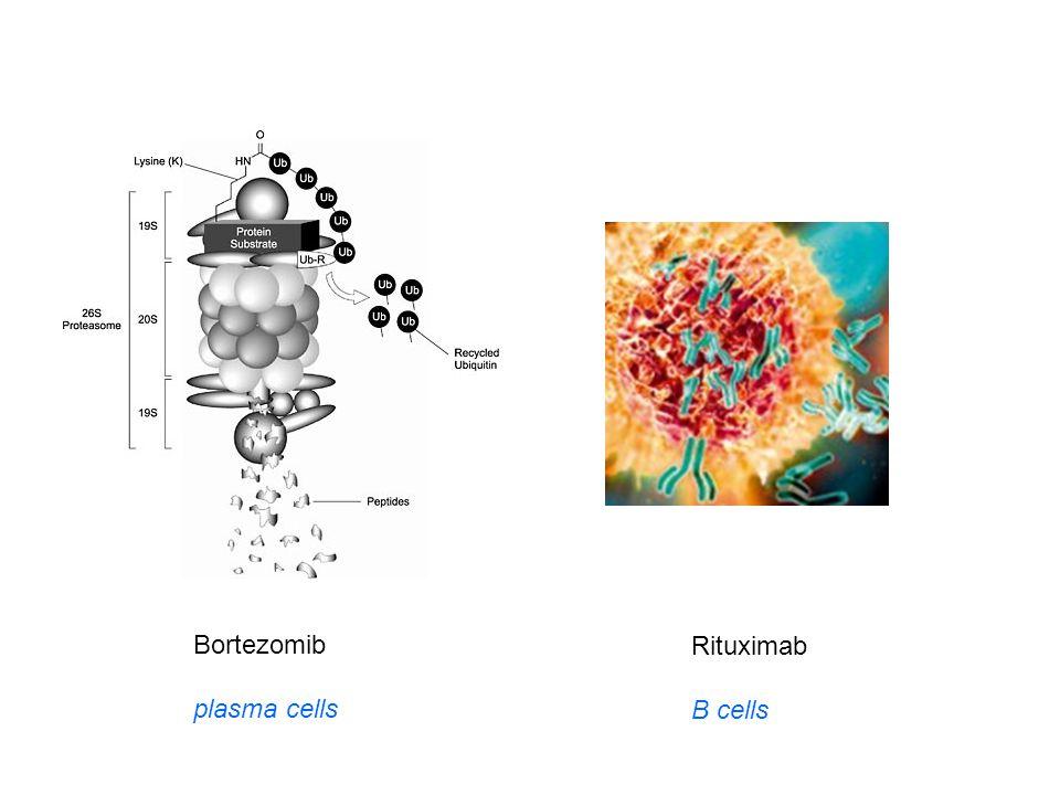 Bortezomib plasma cells Rituximab B cells