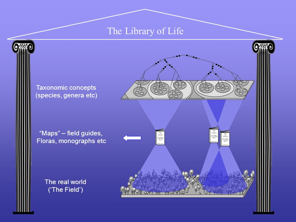 The Library of Life The real world ('The Field') Taxonomic concepts (species, genera etc) Maps – field guides, Floras, monographs etc