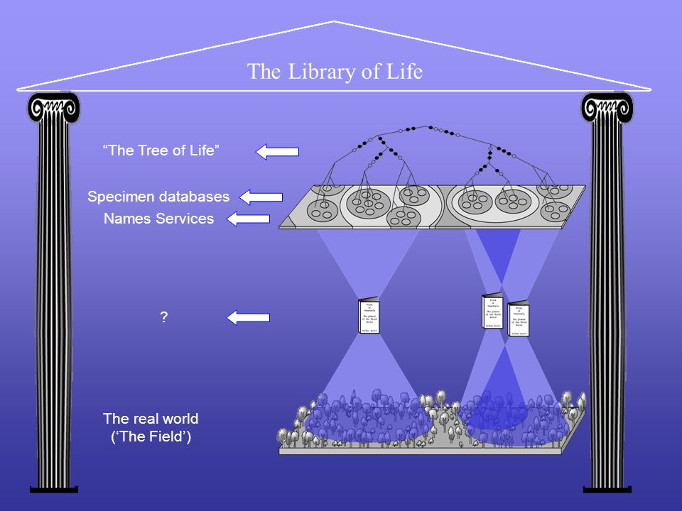 The Library of Life The real world ('The Field') Specimen databases .