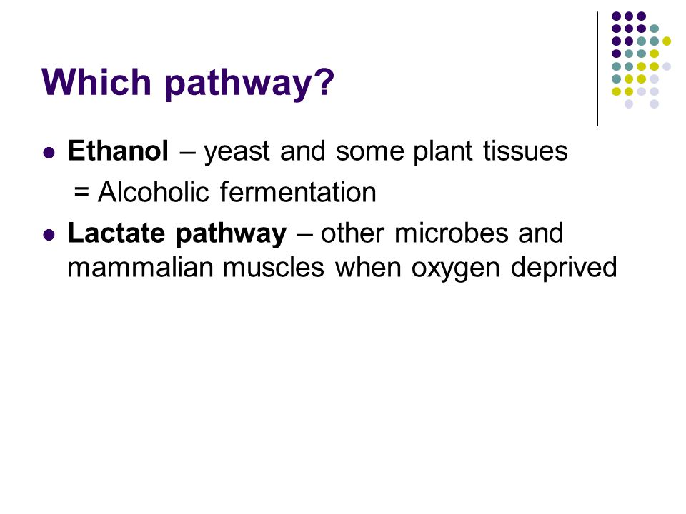 Which pathway? Ethanol – yeast and some plant tissues = Alcoholic fermentation Lactate pathway – other microbes and mammalian muscles when oxygen depr