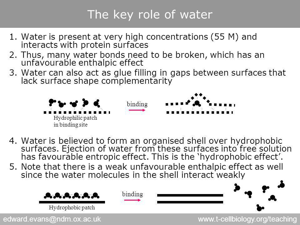 edward.evans@ndm.ox.ac.ukwww.t-cellbiology.org/teaching The key role of water 1.Water is present at very high concentrations (55 M) and interacts with