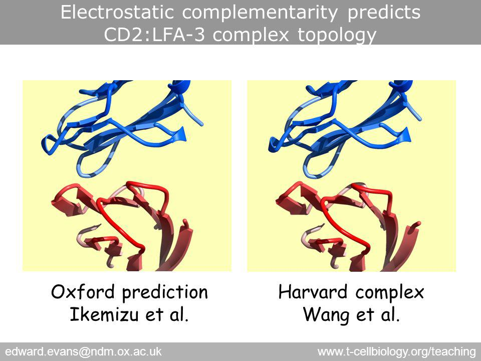 edward.evans@ndm.ox.ac.ukwww.t-cellbiology.org/teaching Electrostatic complementarity predicts CD2:LFA-3 complex topology Harvard complex Wang et al.