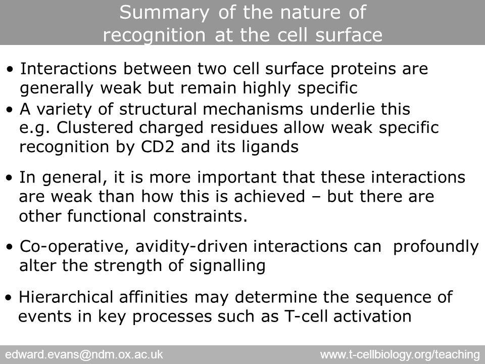 edward.evans@ndm.ox.ac.ukwww.t-cellbiology.org/teaching Interactions between two cell surface proteins are generally weak but remain highly specific Hierarchical affinities may determine the sequence of events in key processes such as T-cell activation Co-operative, avidity-driven interactions canprofoundly alter the strength of signalling In general, it is more important that these interactions are weak than how this is achieved – but there are other functional constraints.