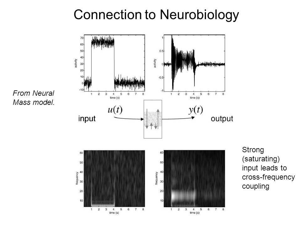 Connection to Neurobiology From Neural Mass model.