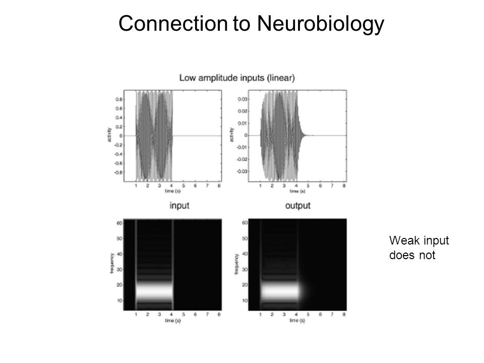 Connection to Neurobiology Weak input does not