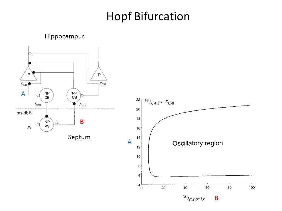 Hippocampus Septum A A B B Hopf Bifurcation