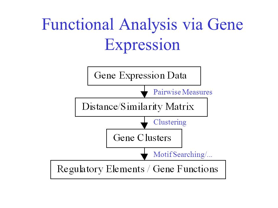 Functional Analysis via Gene Expression Pairwise Measures Clustering Motif Searching/...