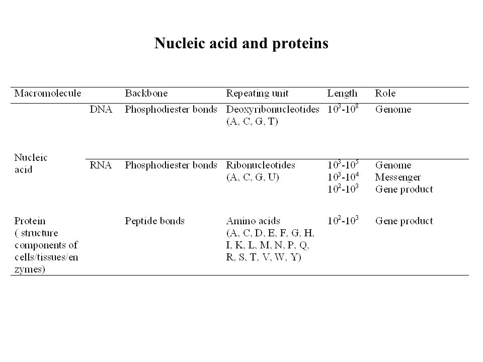 Nucleic acid and proteins