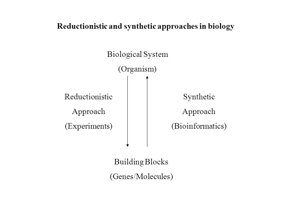 Reductionistic and synthetic approaches in biology Biological System (Organism) Building Blocks (Genes/Molecules) Synthetic Approach (Bioinformatics) Reductionistic Approach (Experiments)