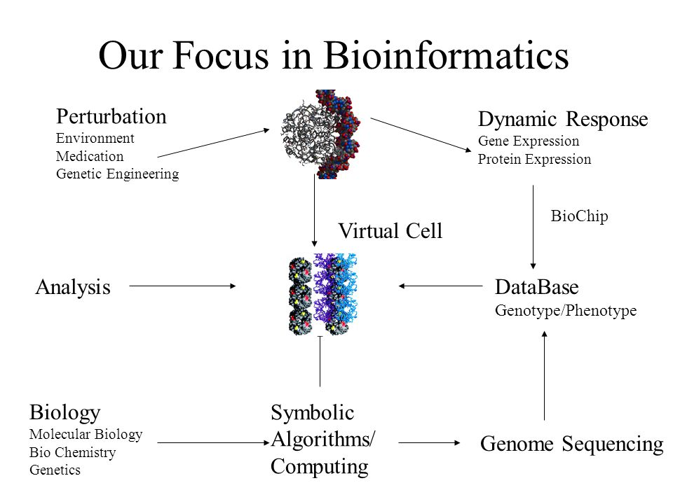 Our Focus in Bioinformatics Perturbation Environment Medication Genetic Engineering Dynamic Response Gene Expression Protein Expression BioChip DataBase Genotype/Phenotype Symbolic Algorithms/ Computing Analysis Biology Molecular Biology Bio Chemistry Genetics Virtual Cell Genome Sequencing