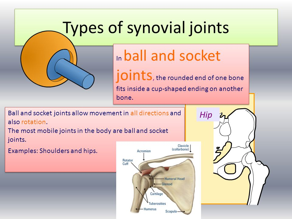 Ball And Socket Joint Examples Ball And Socket Joints Allow