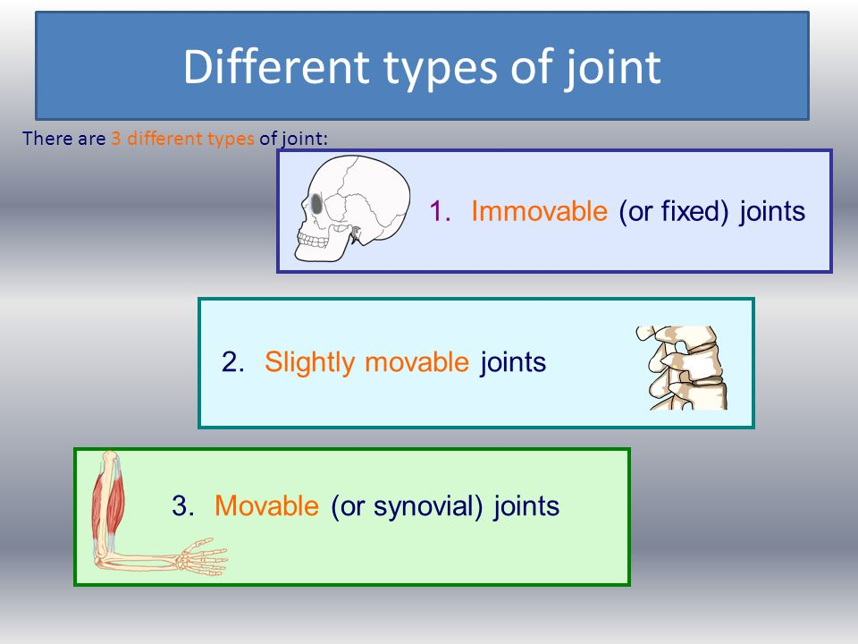 Different types of joint There are 3 different types of joint: 1.Immovable (or fixed) joints 3.Movable (or synovial) joints 2.Slightly movable joints