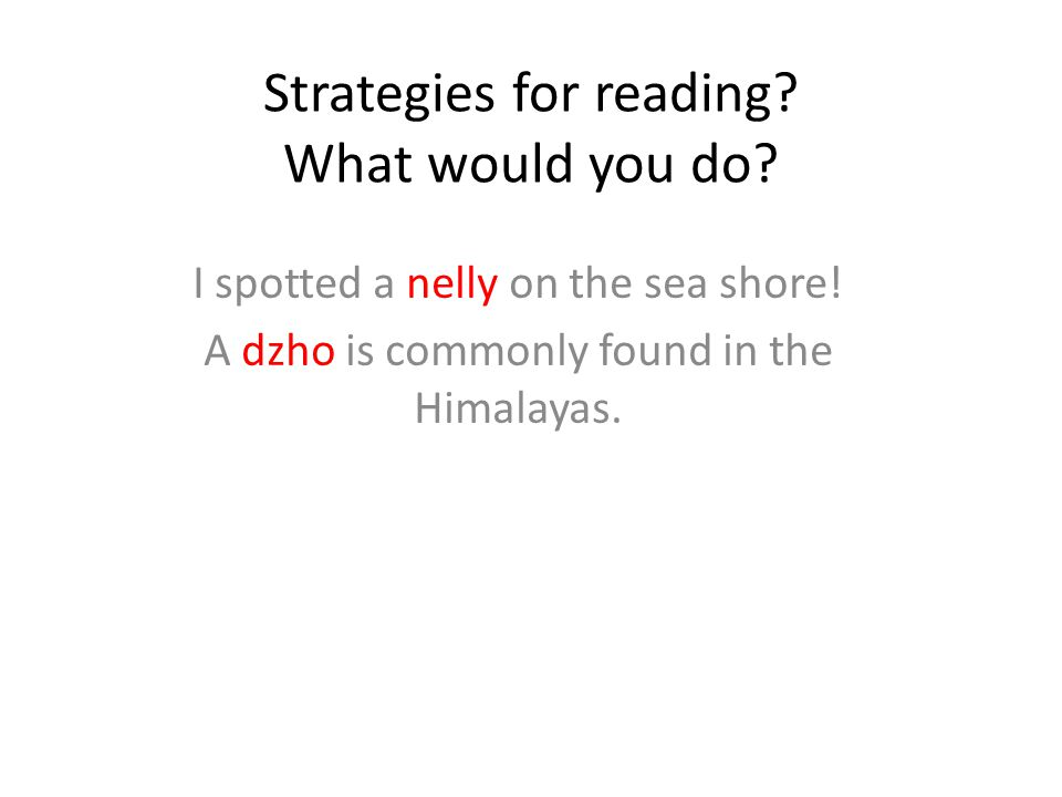 Strategies for reading? What would you do? I spotted a nelly on the sea shore! A dzho is commonly found in the Himalayas.