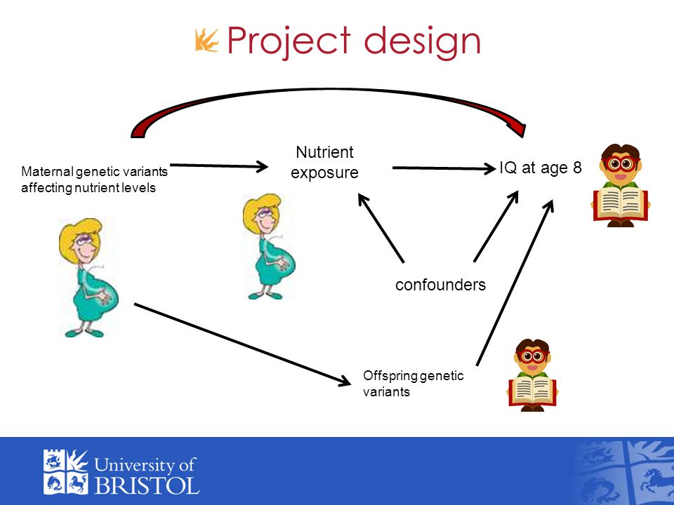 Project design Maternal genetic variants affecting nutrient levels Nutrient exposure IQ at age 8 confounders Offspring genetic variants