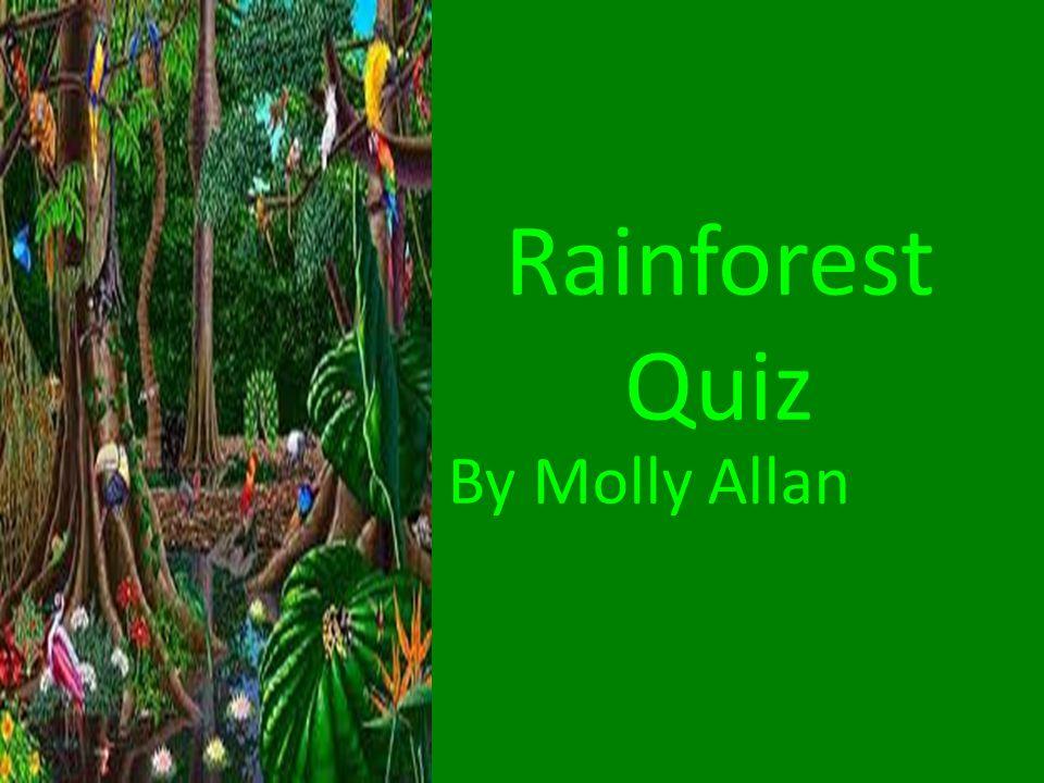 Rainforest Quiz By Molly Allan