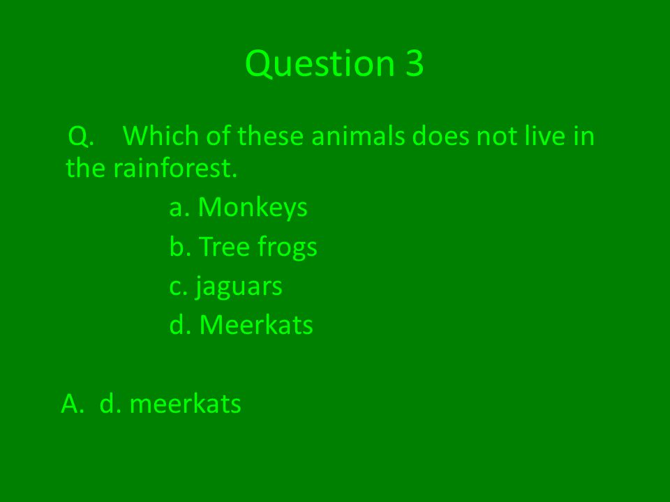 Question 3 Q. Which of these animals does not live in the rainforest.