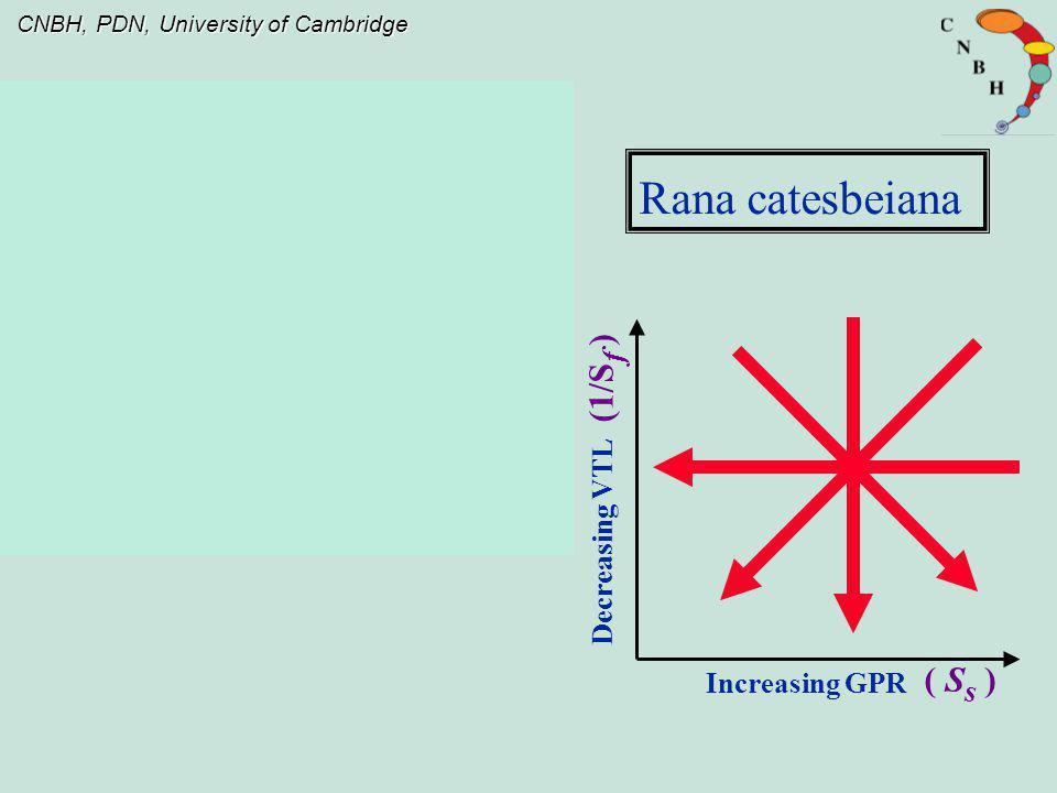 CNBH, PDN, University of Cambridge Decreasing VTL Increasing GPR Rana catesbeiana (1/S f ) ( S s )