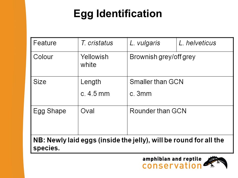 Egg Identification FeatureT. cristatusL. vulgarisL.