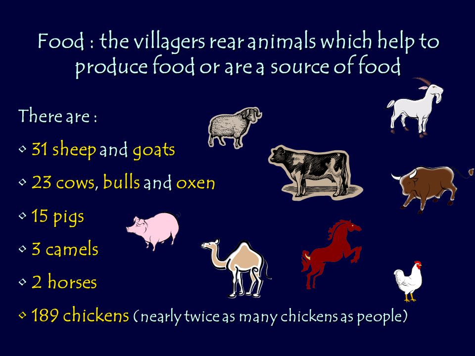 Food : the villagers rear animals which help to produce food or are a source of food There are : 31 sheep and goats 31 sheep and goats 23 cows, bulls and oxen 23 cows, bulls and oxen 15 pigs 15 pigs 3 camels 3 camels 2 horses 2 horses 189 chickens (nearly twice as many chickens as people) 189 chickens (nearly twice as many chickens as people)