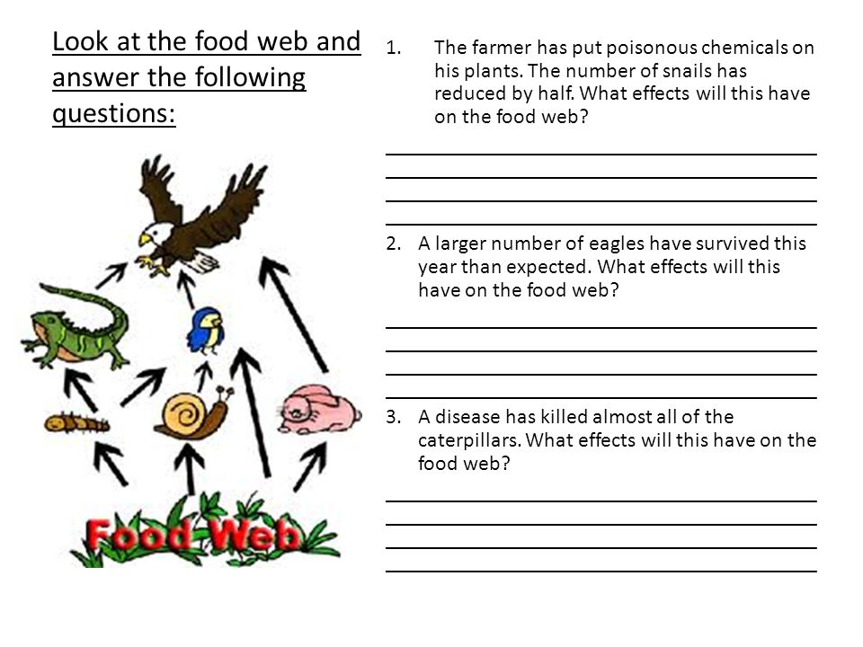 Look at the food web and answer the following questions: 1.The farmer has put poisonous chemicals on his plants.