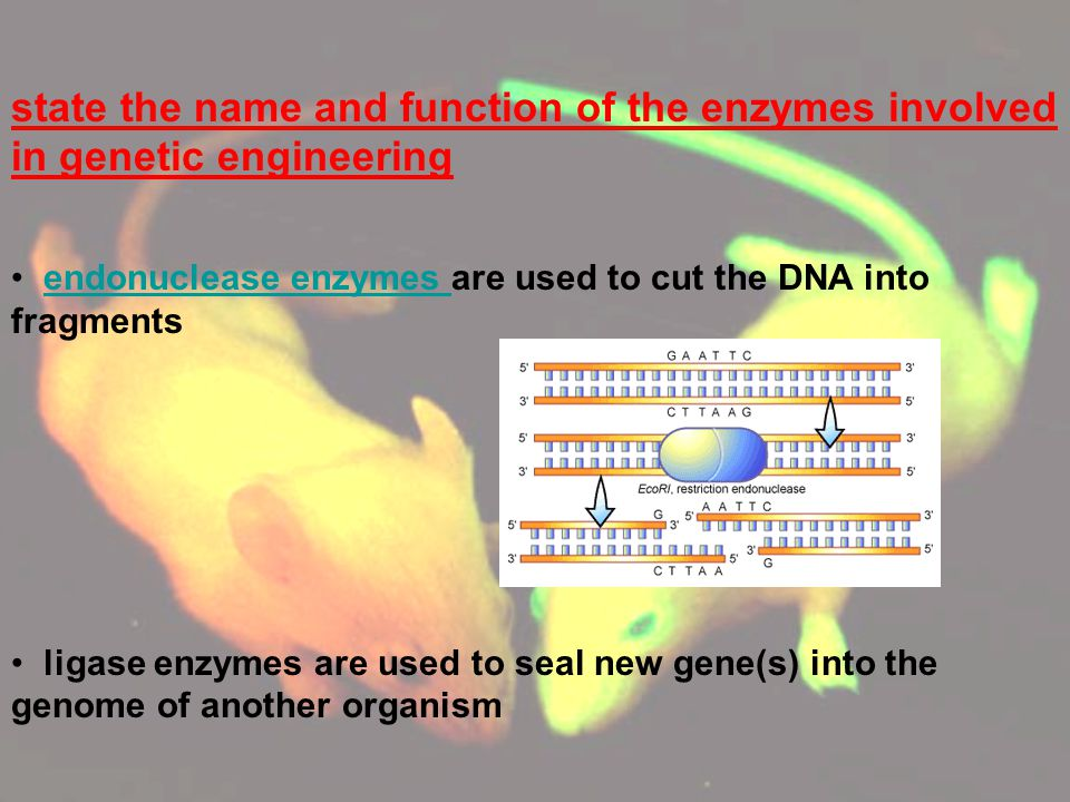 sequence the stages involved in genetic engineeringgenetic engineering (transfer of the human insulin gene to the E.