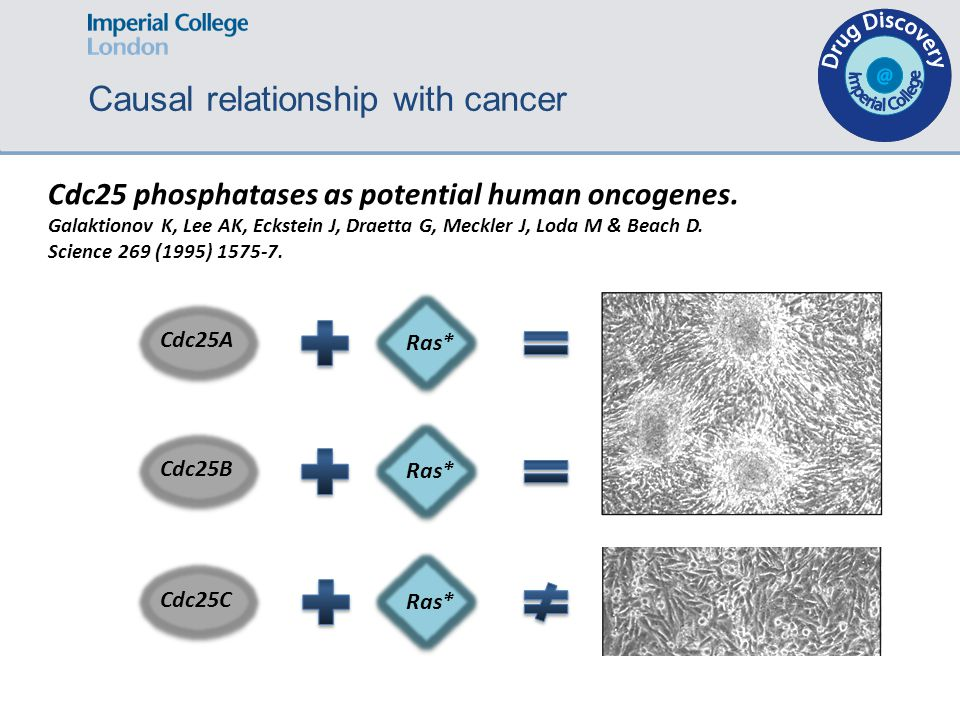 Cdc25 phosphatases as potential human oncogenes.