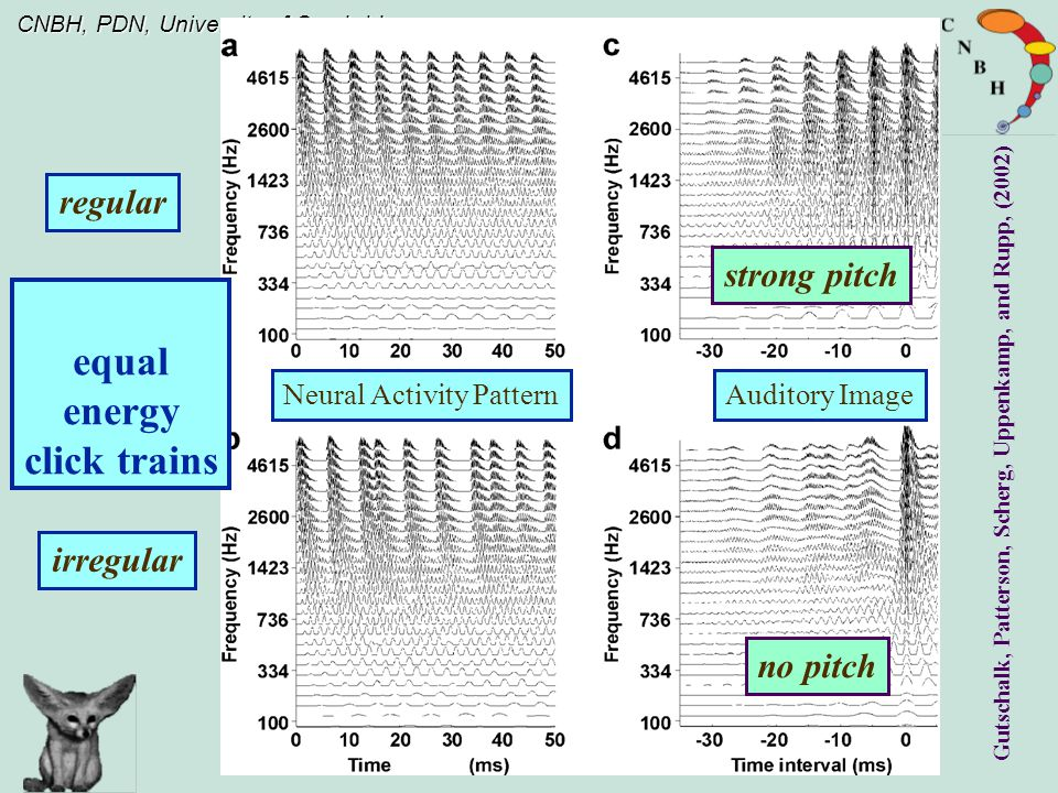 CNBH, PDN, University of Cambridge regular irregular Neural Activity PatternAuditory Image equal energy click trains Gutschalk, Patterson, Scherg, Uppenkamp, and Rupp, (2002) strong pitch no pitch