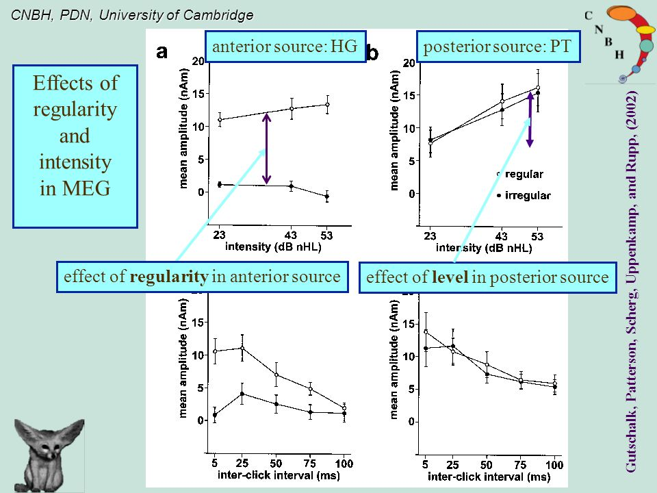 CNBH, PDN, University of Cambridge Effects of regularity and intensity in MEG anterior source: HGposterior source: PT Gutschalk, Patterson, Scherg, Uppenkamp, and Rupp, (2002) effect of level in posterior source effect of regularity in anterior source
