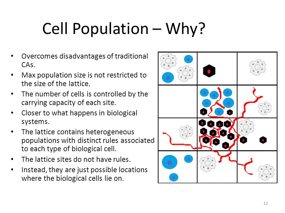 Cell Population – Why. Overcomes disadvantages of traditional CAs.