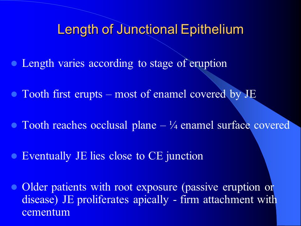 Length of Junctional Epithelium Length varies according to stage of eruption Tooth first erupts – most of enamel covered by JE Tooth reaches occlusal