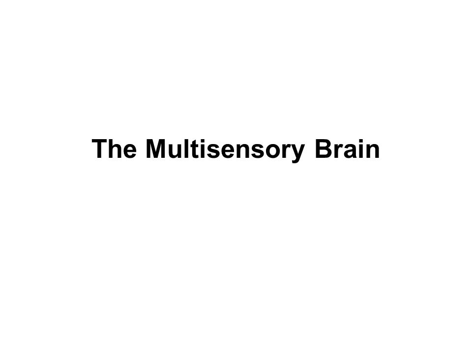 The Multisensory Brain