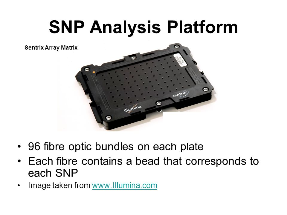 SNP Analysis Platform 96 fibre optic bundles on each plate Each fibre contains a bead that corresponds to each SNP Image taken from   Sentrix Array Matrix