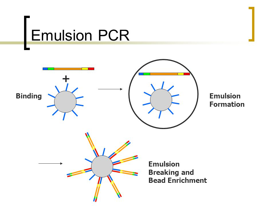 Emulsion PCR + BindingEmulsion Formation Emulsion Breaking and Bead Enrichment