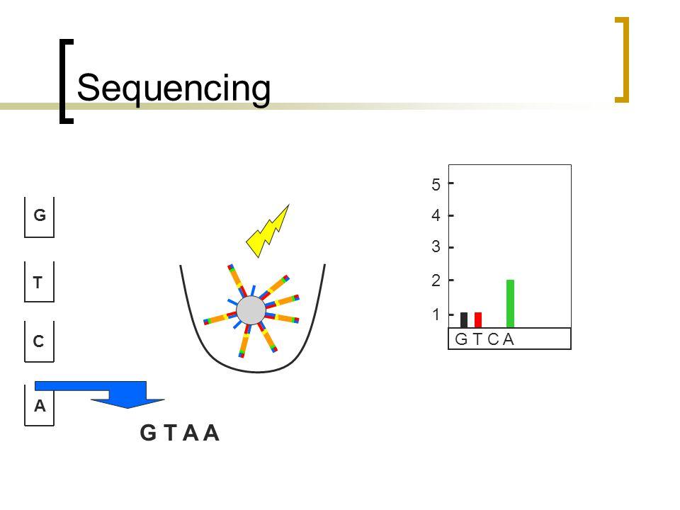 Sequencing G T C A G T C A 1 2 3 4 5 G T A A