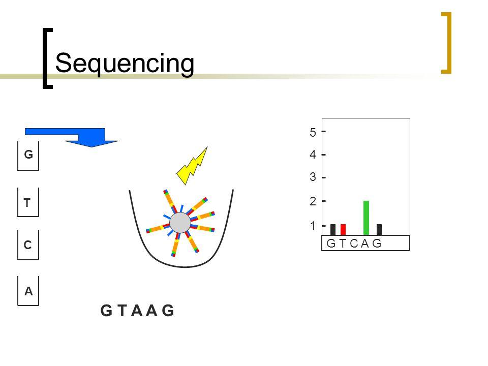 Sequencing G T C A G T C A G 1 2 3 4 5 G T A A G