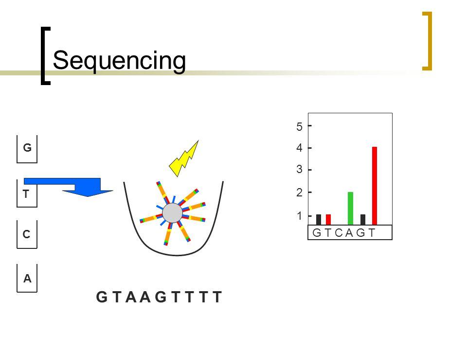 Sequencing G T C A G T C A G T 1 2 3 4 5 G T A A G T T T T