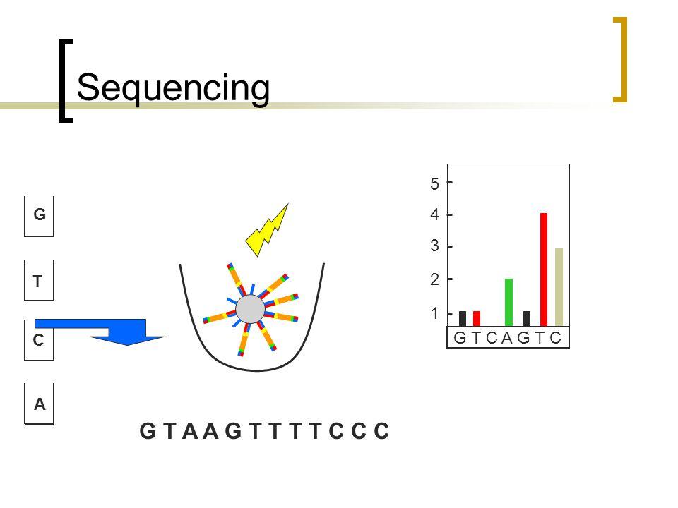 Sequencing G T C A G T C A G T C 1 2 3 4 5 G T A A G T T T T C C C