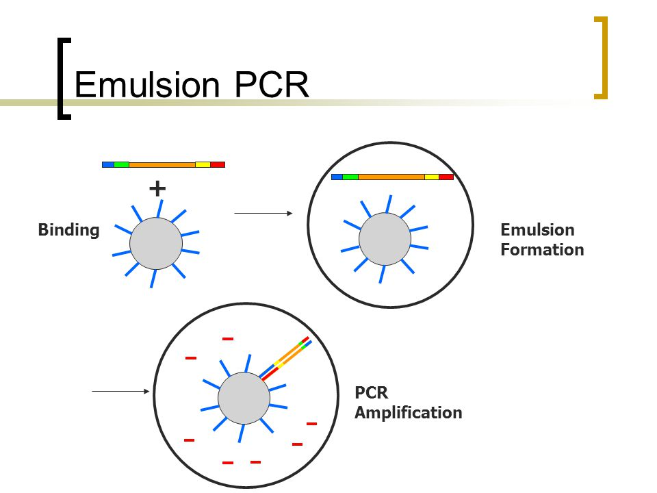 Emulsion PCR + BindingEmulsion Formation PCR Amplification