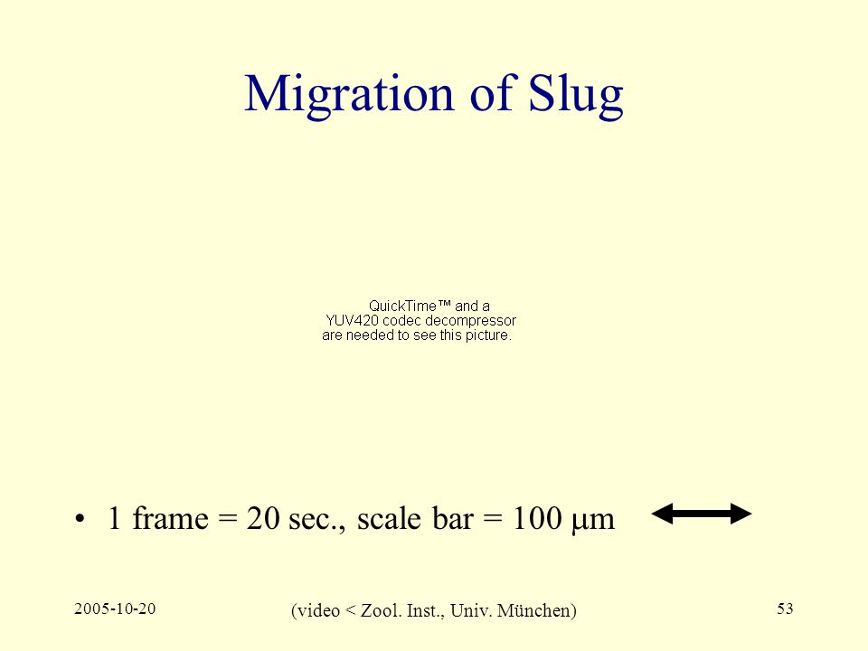 2005-10-2053 Migration of Slug 1 frame = 20 sec., scale bar = 100  m (video < Zool.